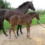 Rogue WRF (6 weeks) - foal services are available at WRF!