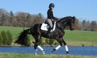Winter Clinic Series with Jontelle Forbus Dressage!